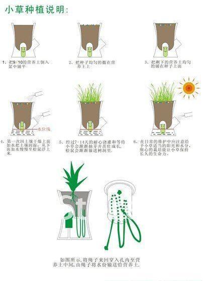 Горшок для растений с белкой -